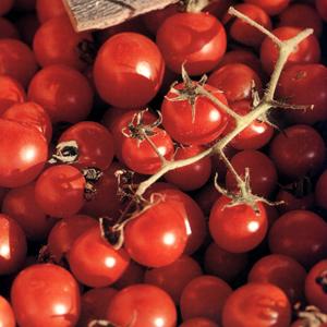 Olympes grøntsagsterrine